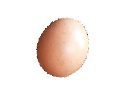 采女もみじ卵(ゆで卵)
